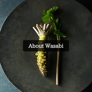About Wasabi